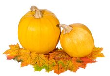 Free Pumpkins With Autumn Leaves Royalty Free Stock Photography - 16082997