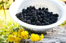 Free Blackberries Stock Image - 16083681