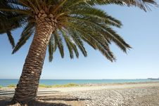 Free Palm At The Beach Royalty Free Stock Images - 16084939