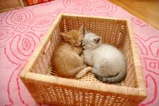 Free Kittens Basket Royalty Free Stock Photo - 16086155