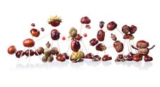 Free Chestnuts Toys Stock Photography - 16086972