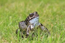Toad On The Grass
