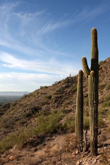 Free Saguaro Cactus In The Hills Near Scottsdale Royalty Free Stock Image - 16087606