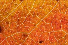 Macro Of An Autumn Leaf Stock Photo