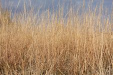 Dried Grass Of The Prairie In Fall Stock Images