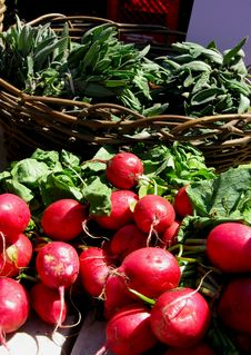 Free Radishes In The Sunshine Stock Photography - 16088202