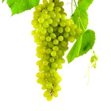 Free Bunch Of Grapes Royalty Free Stock Image - 16088486