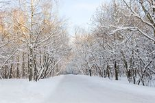 Free Winter Alley Stock Photography - 16088612
