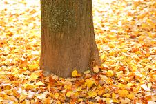 Free Autumn Background Royalty Free Stock Photography - 16089417