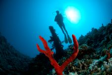 Free Silhouette Of Female Scuba Diver Stock Images - 16089824