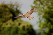 Free Black Kite Stock Image - 16089921