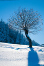 Free Tree Covered With Snow In Winter Stock Photography - 16093732