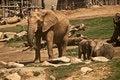 Free Elephants Royalty Free Stock Image - 16095836