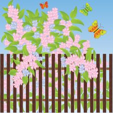 Free Gentle Flowers And Multi-colored Butterflies Royalty Free Stock Photo - 16090685