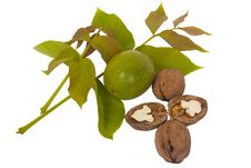 Free Fresh Walnut And Leaves Stock Photography - 16090712