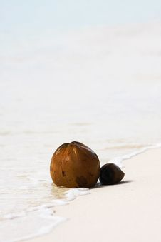 Free Two Coconuts On Beach Royalty Free Stock Photo - 16092755