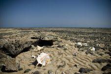 Free Empty Shells On A Rocky Beach. Royalty Free Stock Photo - 16093345