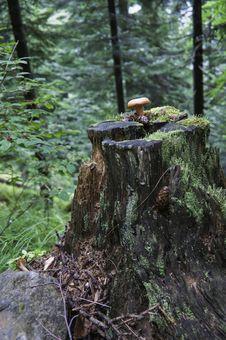 National Park Vanoise Royalty Free Stock Image