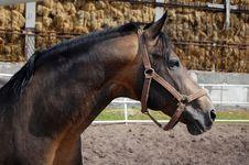 Free Black Horse Stock Photo - 16095580