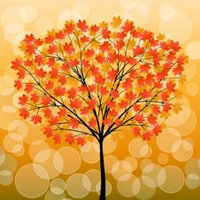 Free Autumn Tree Royalty Free Stock Photography - 16095907