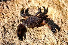Free Crab Stock Photos - 16096403