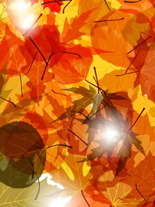 Free Light Through Autumn Leaves Royalty Free Stock Photography - 16097417