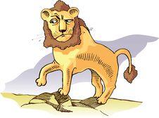 Surprised Lion Stock Images