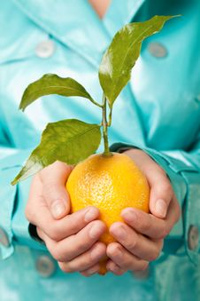 Free Hands Lemon Fresh Royalty Free Stock Image - 16098346