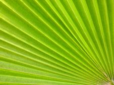 Free Palm Leaf Stock Image - 16099291