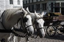 Free Horses And Carriage. Stock Images - 16099744