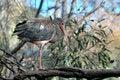 Free African Bird Stock Photo - 1613260