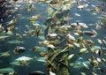 Free Fish Royalty Free Stock Photo - 1616625