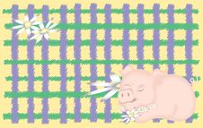 Free Sleeping Pig On Plaid Royalty Free Stock Photo - 1610545