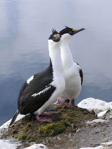 Free Birds Love Stock Image - 1611951