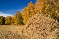 Free Autumn Stock Images - 1612354