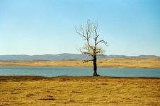 Free Single Tree Near Lake Royalty Free Stock Photography - 1612657