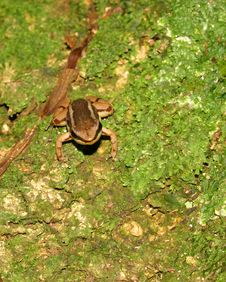 Free Dart Frog On Leaf In Panama, Central America Stock Image - 1613271