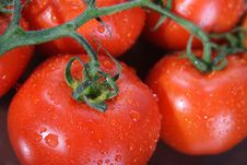 Free Tomato Bunch Royalty Free Stock Photo - 1615815