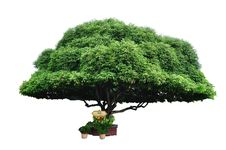 Free Bullet Wood Tree Stock Photo - 16100270