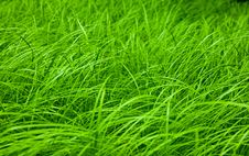 Free Close-up Of Spring Grass Field Royalty Free Stock Image - 16101226