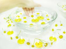 Free Hand In Plate With Daisy Flowers Royalty Free Stock Photography - 16102867