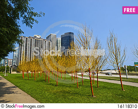 Free Painted Trees In Butler Field, Chicago Stock Photo - 16118310