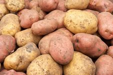 Free Potatoes Stock Images - 16116844