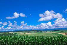Free Green Grass  Under Blue Sky Stock Photos - 16118093