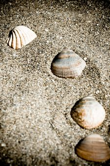 Free Vintage Shells On The Sand Stock Photos - 16118293
