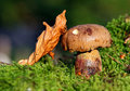 Free Cep In Moss Stock Photos - 16127433