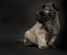 Free Puppy Dog Begging Stock Images - 16120254