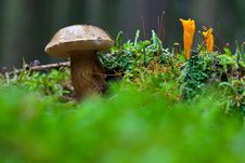 Mushrooms In The Forest Stock Photos