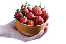 Free Strawberries In Bowl In Female Hands Stock Image - 16120631