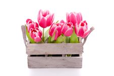Free A Bundle Of Pink Tulips Stock Photography - 16121232